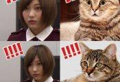 【欅坂46】渡邉理佐の「欅辞めます」ドッキリ時の志田愛佳の表情が完全に猫wwwwww